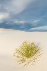 Coloe Print - Yucca Spray - Melissa Anderson