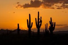 Nature - Cactus at Sunset - Fred Sobottka