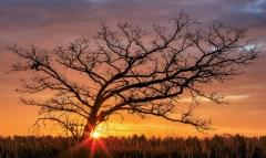 Nature - Sunrise on the Prairie - Amanda Bierbaum