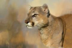 03 Cougar Stare