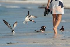 Honorable Mention Travel - Lido Beach Sarasota FL - Gary Schafer