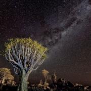 2nd Place Realistic - Quiver Tree and the Darkest Sky - Lori Moilanen