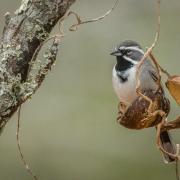 3rd Place Nature - Sparrow in a Pod - Lori Moilanen