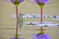 2.Symmetry - Michael Herrem