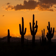 Nature - Cactus at Sunset - Fred Sobottka