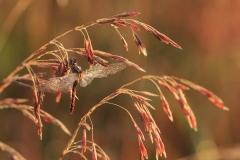 Nature - Drying Out - Amanda Bierbaum