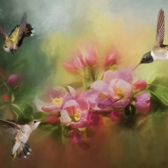 1st Place Creative - Flowers and Hummingbirds - Melissa Anderson