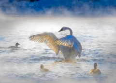 Contemporary Honorable Mention - Swan on Frigid Morning - Marianne Diericks