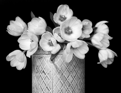 Mono Print Honorable Mention - Tulips in Metal Can - Terry Butler