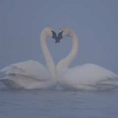 Nature Honorable Mention - Love in the Mist - Larry Weinman