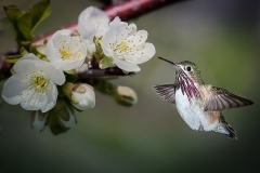 Realistic Honorable Mention - Hummingbird Flight - Betty Bryan