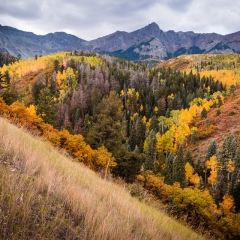 Realistic Acceptanc - Fall in Colorado - Betty Bryan