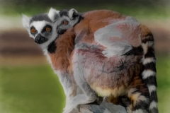 Contemporary Acceptance - Lemur Mom and Baby - Marianne Diericks