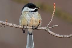 Nature Acceptance - A Little Snack - Marianne Diericks