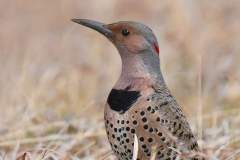 Nature Acceptance - Spring Flicker - MJ Springett