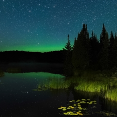 Realistic - Lily Pads and Northern Lights - Terry Butler