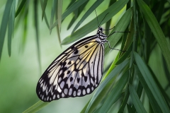 2nd Place Color Print - Butterfly - Terry Butler
