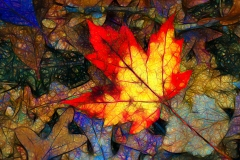 1.Abstract Maple Leaf in Autumn - Ken Wolter