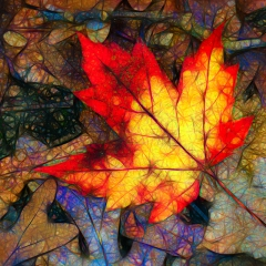 Contemporary Award Fallen Maple Leaf in Abstract - Ken Wolter