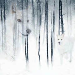 Contemporary Honorable Mention - Arctic Wolf Forest Fantasy - Melissa Anderson