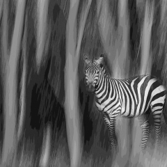 Contemporary - Forest Zebra - Melissa Anderson