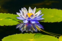 Contemporary - Pond Flower - Fred Sobottka