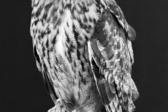 Mono Print - Eurasian Eagle Owl - Melissa Anderson