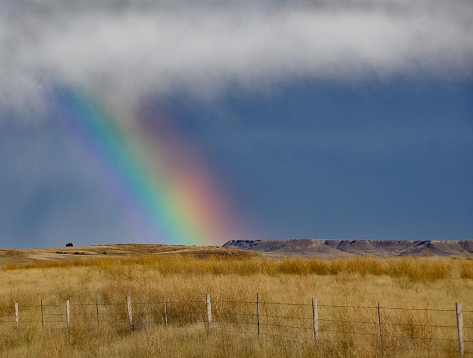 Montana Rainbow - Steve Plocher