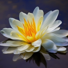 1st Place Color Print - Water Lily - Don Specht