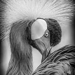 1st Place Mono Print - Crowned Crane - Marianne Diericks
