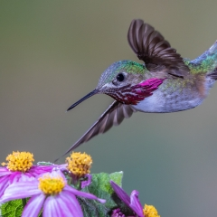 1st Place Pictorial - Beauty in Flight - Melissa Anderson