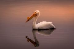 08.Sunset Pelican - Michael Huber