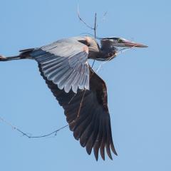 19.Nest Builder - Larry Weinman