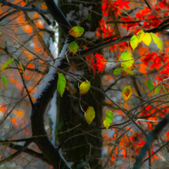 Assignment - Autumn Colors - Mary Johnson