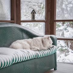 Assignment - Winter Nap - Marianne Diericks