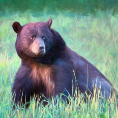 Contemporary - Bear in Meadow - Marianne Diericks