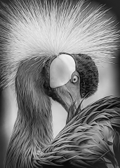 Mono Print Honorable Mention - Crowned Crane - Marianne Diericks