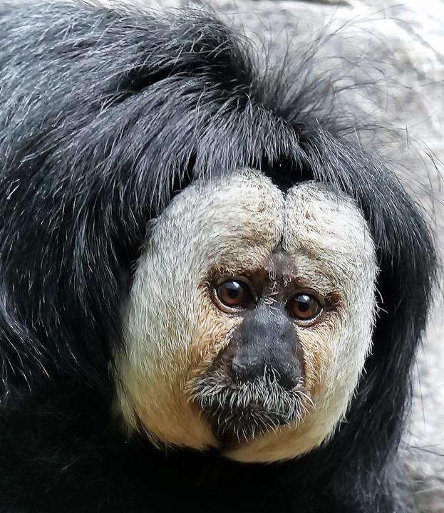 """""""Monkey Zoo Business"""" - Carl Wegener"""