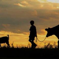 1.Silhiouette - Two Boys and Their Animals - Rikki Van Dyk