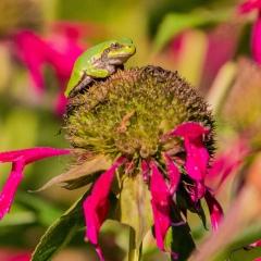 3.Happy-Frog-292