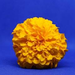 3.Marigold-288