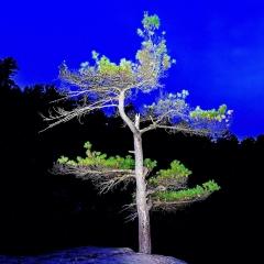 8.River_.Pine-292