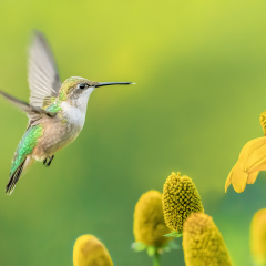 2nd Place Pictorial - Hummingbird in the Garden - Marianne Diericks
