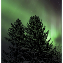 Evergreen Aurora - Michael Herrem