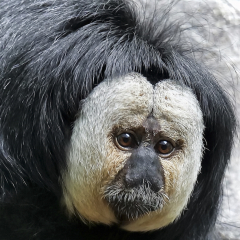 Monkey Zoo Business - Carl Wegener