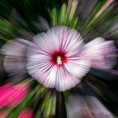 3.1st Place - Floral Explosion - Chap Achen
