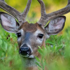 10.Shooting through Meadow to Buck - 330