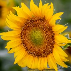 2.Happy-Flower-330
