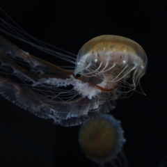 9.JellyFish - 288