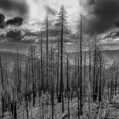 Blank & White Acceptance - Aftermath of the Ferguson Fire - Mick Richards